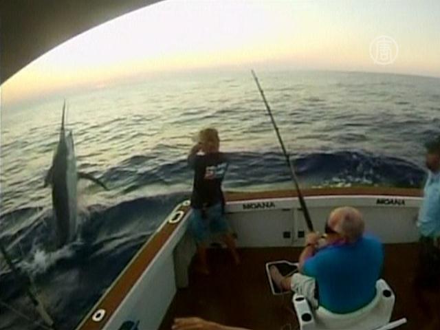 Видео: рыбу весом в полтонны поймали в Австралии