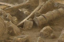 Во Франции нашли 200-тысячелетний скелет мамонта