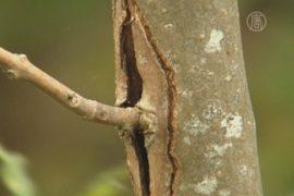 Леса Великобритании поразила опасная болезнь