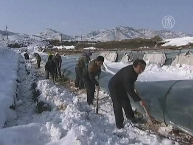 Северо-восток Китая засыпает снегом