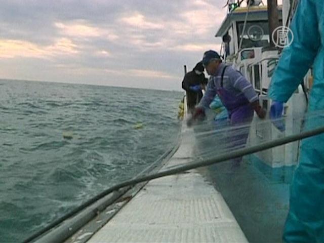 Почему возле «Фукусимы» рыба всё ещё радиоактивна?