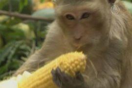 Фруктовый банкет для обезьян устроили в Таиланде