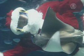 Подводный Санта-Клаус объявился в Японии