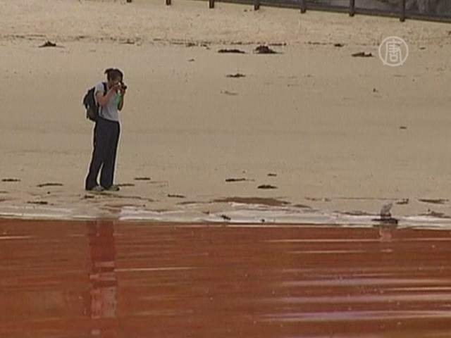 Вода на пляжах Сиднея покраснела