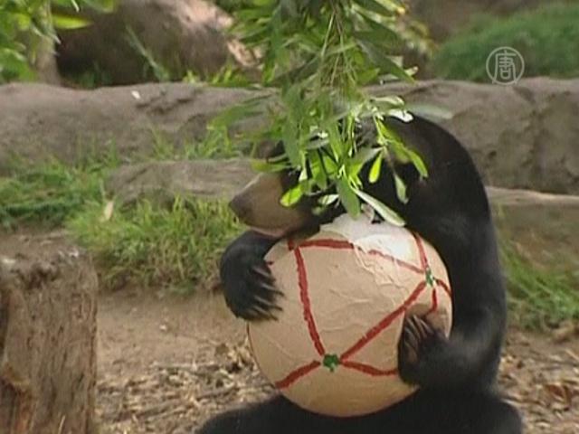 Питомцы зоопарков получают подарки от Санты