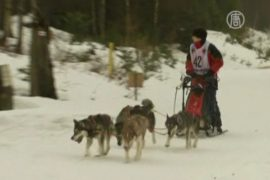 Гонкам на собачьих упряжках мокрый снег не помешал