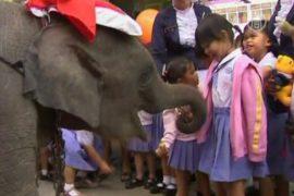 Слоны-Санты радуют детвору в Таиланде