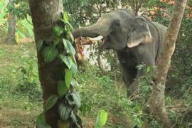Слон убил своего смотрителя