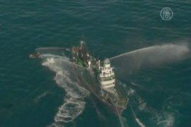 Япония защищает своё право на убой китов