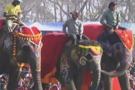 Конкурс красоты среди слонов прошел в Непале
