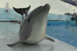 Украинский дельфин учится ползать по полу