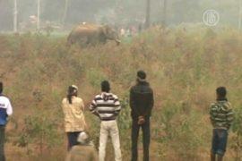 В Индии дикий слон опять напал на деревню