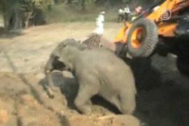 Как в Индии из колодца доставали слоненка
