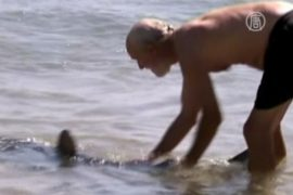 Турист оттащил акулу голыми руками