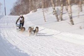 Погонщики ездовых собак соревнуются на Камчатке