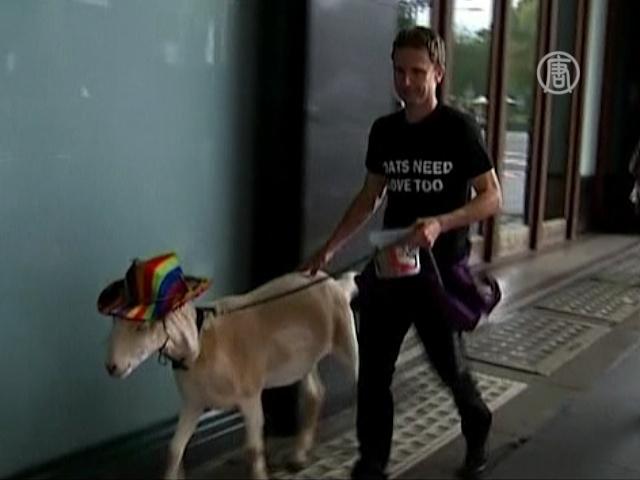 Австралийский суд оправдал козла, съевшего цветы