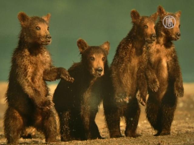 Фестиваль дикой природы проходит в Москве