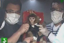 Иран отправил в космос обезьяну