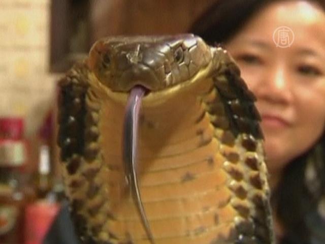 «Змеиные короли» Гонконга – исчезающий вид