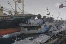 Японские китобои пошли на таран