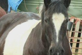 Ирландцы не хотят есть лошадей