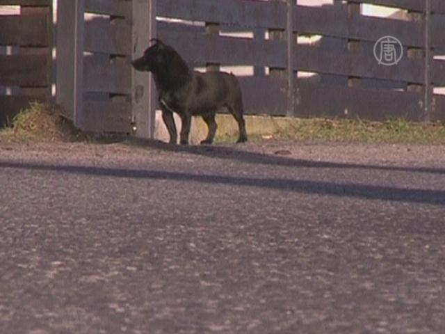 Трёхлетняя девочка выжила в лесу благодаря собаке