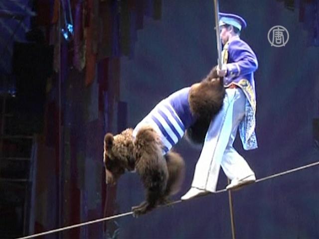 Медведи-канатоходцы снова на публике