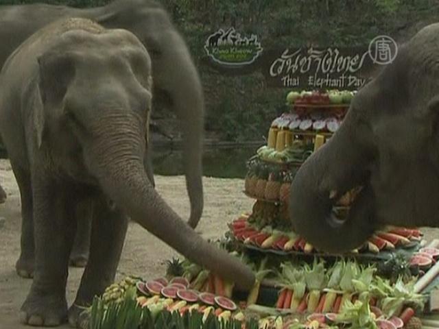 Тайским слонам устроили праздник живота