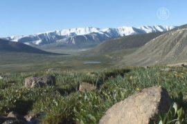 Экологи против газопровода через плато Укок