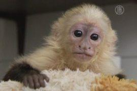 Джастин Бибер забыл про свою обезьянку?