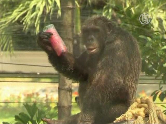 Слонам – лёд, обезьянам — мороженое
