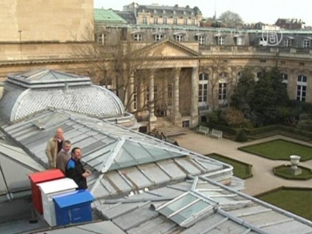 На здании парламента Франции поставили пасеку