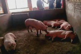Что убило 550 животных в китайской деревне?