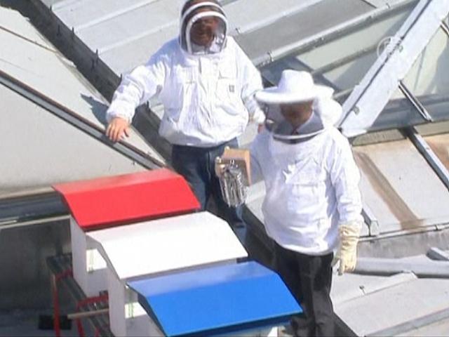 60 тысяч пчёл поселились на крыше парламента