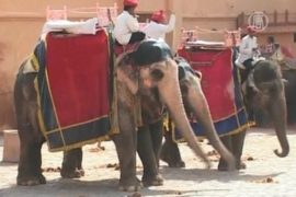 Из-за жары слонам не хватает воды