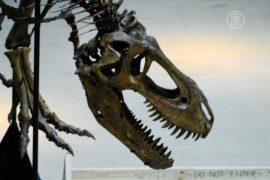 Скитания тираннозавра завершились: пора домой!