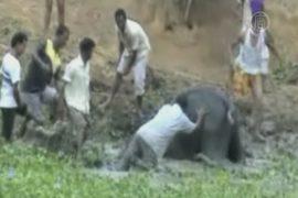 Упавшего в яму слоненка спасли в Индии