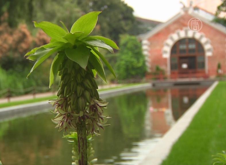 Москвичи возродили сады Семирамиды