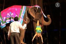 Дикие животные в цирках Индии теперь под запретом