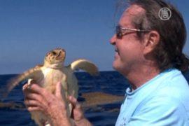 Объевшуюся полиэтиленом черепаху вернули в океан