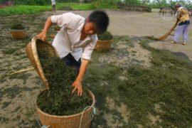 Фермеров в Китае будут лишать земли законно?