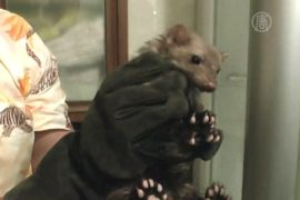 Непрошенный гость из унитаза шокировал детей