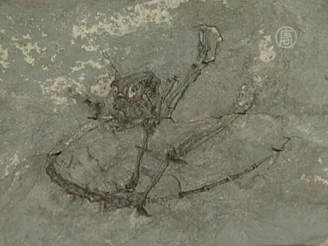 Найденный древнейший примат озадачил ученых