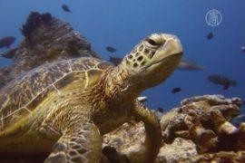 Австралия показала миру Барьерный риф