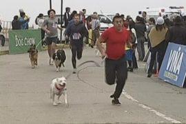 Большой собачий забег состоялся в Чили