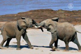 Слонов и тигров уберут из цирков в Колумбии
