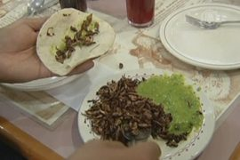 Жуки и улитки помогут преодолеть голод