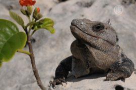 В жилой дом в Китае заползла огромная ящерица