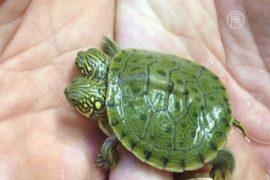 Двухголовую черепаху показали в Сан-Антонио