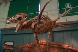 Древнюю рептилию с ластами показали в Аргентине
